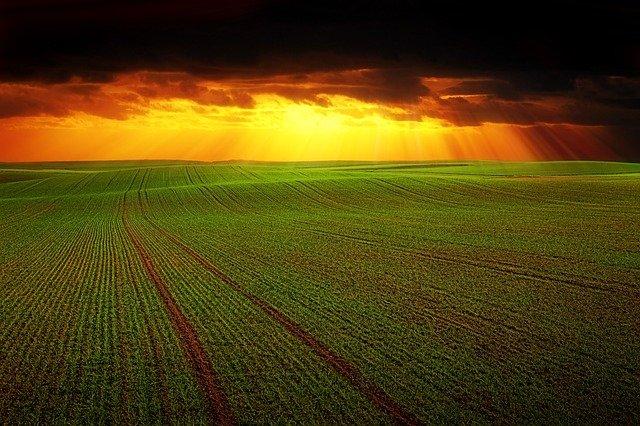 El suelo, pieza clave para la biodiversidad y rentabilidad agrícola