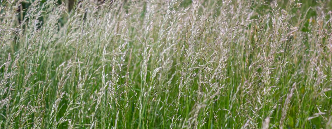 malas hierbas en cereales de invierno